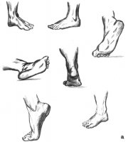 Стопа ноги